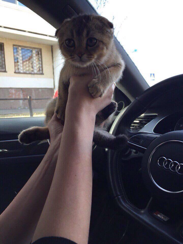 Котенок Урс3