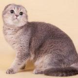 Питомник кошек Paradise Corner