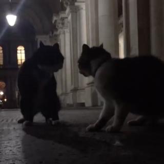 Коты министров Англии