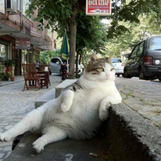 Кот Томбили