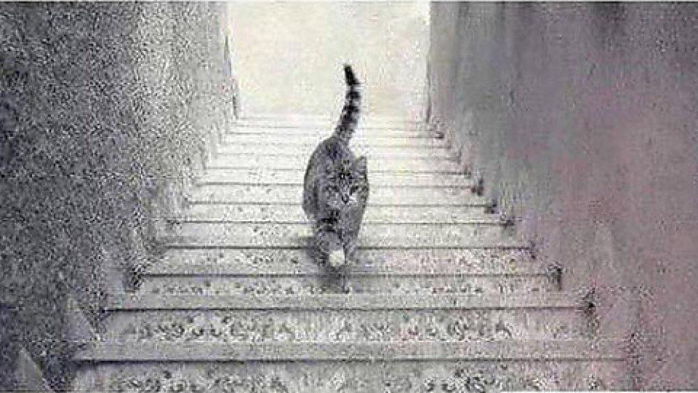 Вопрос про кота